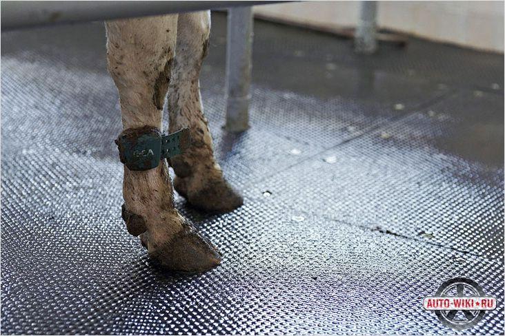 Копытам коровы нужна мягкая поверхность